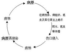 病害循环.png