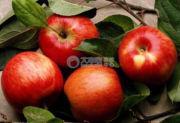 赤霉素处理的苹果
